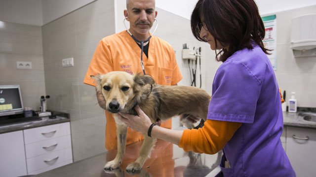 Medicina interna Veterinaria Valencia hospital veterinario benipeixcar