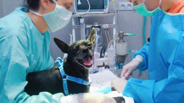 Oncología Veterinaria Valencia hospital veterinario benipeixcar