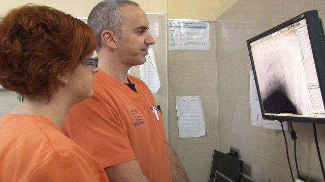 Radiología Digital Veterinaria Valencia hospital veterinario benipeixcar