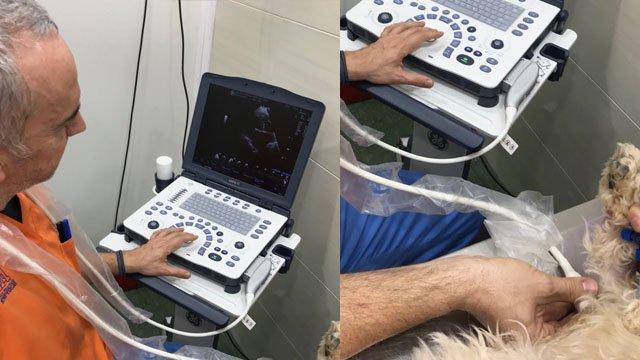 Ecocardiografía Veterinaria hospital veterinario benipeixcar