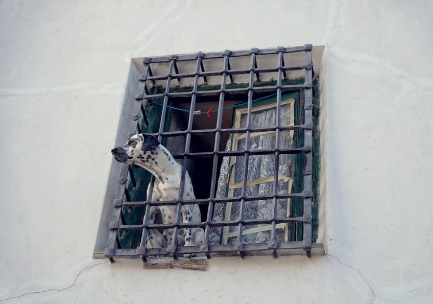 La ansiedad por separación en el perro