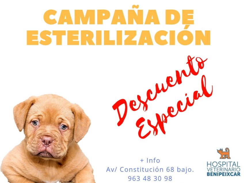 Esterilización en Mascotas
