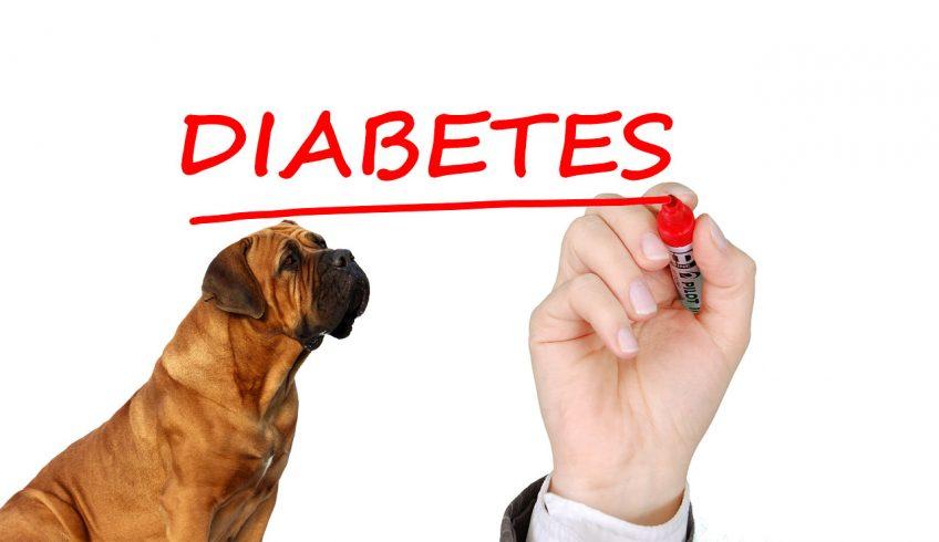La diabetes en los animales de compañía