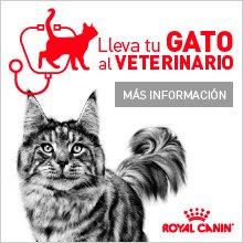 Lleva a tu Gato al Veterinario