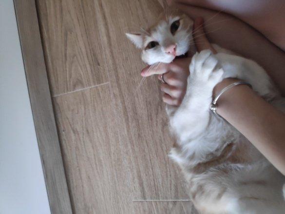 ¿ Por qué mi gato me muerde?