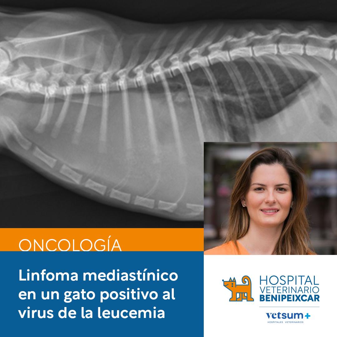 Linfoma mediastínico en un gato positivo al virus de la leucemia
