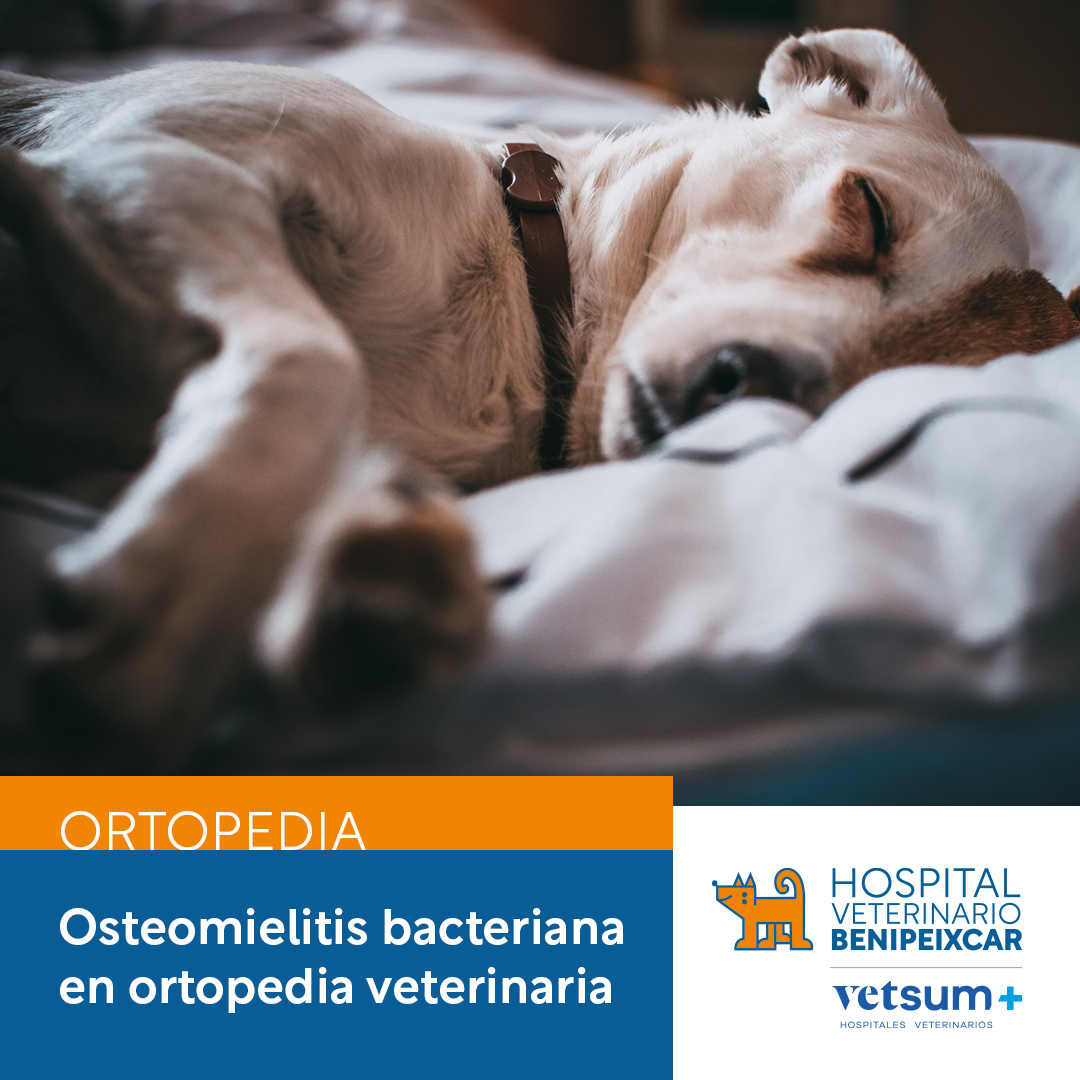 Osteomielitis bacteriana en medicina veterinaria